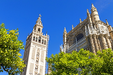 The Cathedral of Seville and the Giralda Bell Tower seen from the inner courtyard, UNESCO World Heritage Site, Seville, Andalusia, Spain, Europe