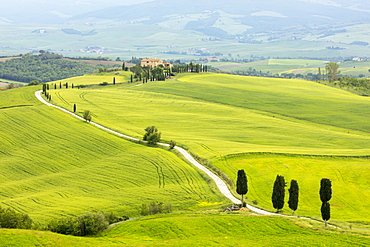 Cypress trees and green fields at Agriturismo Terrapille (Gladiator Villa) near Pienza in Tuscany, Italy, Europe