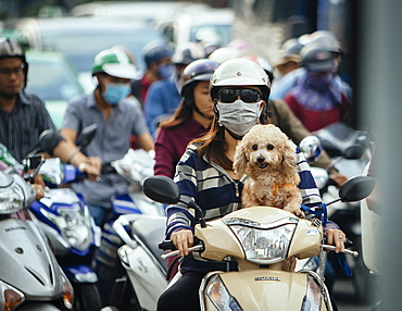 Dog on moped in Ho Chi Minh City, Vietnam, Indochina, Southeast Asia, Asia