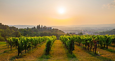 Castelbellino, Marche, Italy, Europe