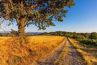 On the Fausto Coppi's roads, white road called Strada Vicinale Montegrande, with Sarezzano in the background, Tortona area, Alessandria, Piedmont, Italy, Europe