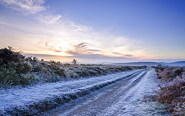 Heavy frost as the sun fights to leave a cloud bank on the heathland of Woodbury Common, near Exmouth, Devon, England, United Kingdom, Europe
