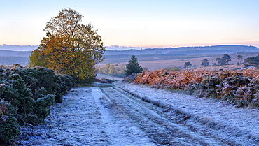 Heavy frost with the first rays of sun on the heathland of Woodbury Common, near Exmouth, Devon, England, United Kingdom, Europe