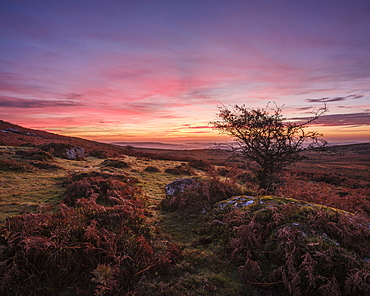Twilight on the slopes below Saddle Tor with mist in the Teign Valley, Dartmoor National Park, Bovey Tracey, Devon, England, United Kingdom, Europe