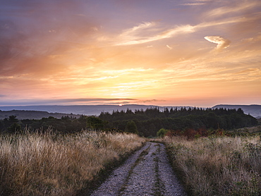 Colourful dawn clouds above a track on the heathland of Woodbury Common, near Exmouth, Devon, England, United Kingdom, Europe