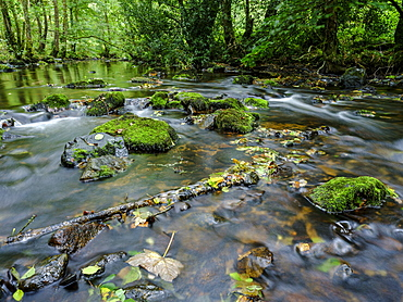 Mossy and wet rocks along with autumn colours surrounding the River Bovey, Dartmoor National Park, Bovey Tracey, Devon, England, United Kingdom, Europe