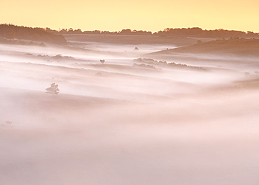 A huge blanket of dawn mist flows down the valley, leaving only trees and bushes rising above it, New Forest, Hampshire, England, United Kingdom, Europe