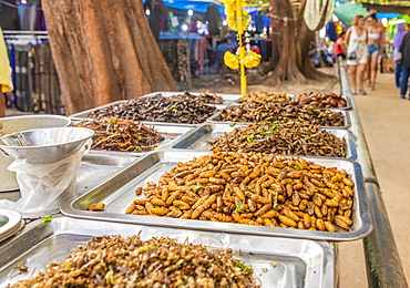 A stall selling various insects in the night market in Kamala in Phuket, Thailand, Southeast Asia, Asia