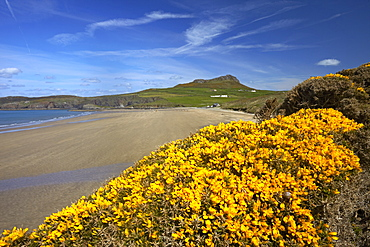 Whitesands Bay in the Pembrokeshire National Park, Pembrokeshire, Wales, United Kingdom, Europe