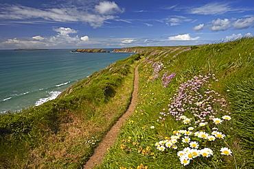 The Pembrokeshire coastal path above Marloes, Wales, United Kingdom, Europe