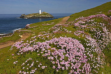 Godrevy lighthouse seen from the thrift covered coastal path at Godrevy Point near Hayle, Cornwall, England, United Kingdom, Europe