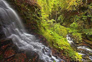 A stream cascading into the Moness Burn which flows through the Birks of Aberfeldy, Perthshire, Scotland, United Kingdom, Europe