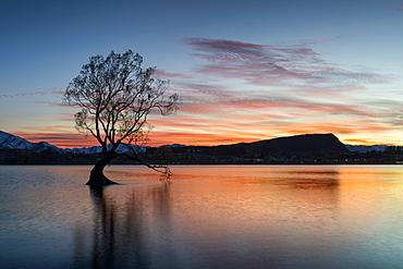 The Wanaka Tree with dramatic sky at sunrise, Lake Wanaka, Otago, South Island, New Zealand, Pacific