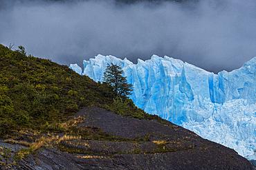 Lone tree set against Perito Moreno Glacier in Los Glaciares National Park, UNESCO World Heritage Site, Santa Cruz Province, Patagonia, Argentina, South America