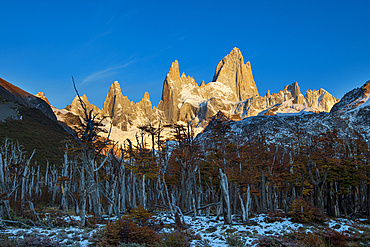 Mount Fitz Roy with forest in autumn, El Chalten, Los Glaciares National Park, UNESCO World Heritage Site, Patagonia, Argentina, South America