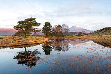 Kelly Hall Tarn with view of Coniston Old Man at sunrise, Lake District National Park, UNESCO World Heritage Site, Cumbria, England, United Kingdom, Europe