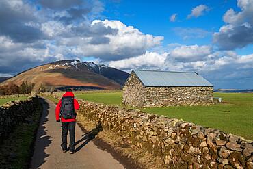 Walker on road leading to Blencathra, Lake District National Park, UNESCO World Heritage Site, Cumbria, England, United Kingdom, Europe