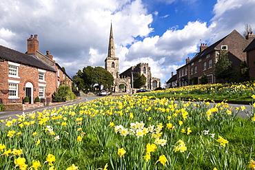 Daffodils on the Village Green, Astbury, Cheshire, England, United Kingdom, Europe