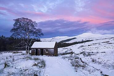 Stone Barn and Footpath leading to the Peak of Shutlingsloe in winter, near Wildboarclough, Peak District National Park, Cheshire, England, United Kingdom, Europe