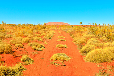 Red sand path in dry bush landscape in Australian outback with Ayers Rock, sandstone monolith in Uluru-Kata Tjuta National Park in the distance. Central Australia, Northern Territory. Red Centre icon.