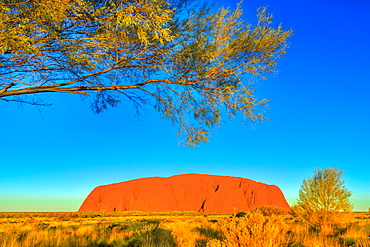 The bush vegetation in winter (dry season) frames the iconic red sandstone monolith called Uluru (Ayers Rock) in Uluru-Kata Tjuta National Park, UNESCO World Heritage Site, Northern Territory, Australia, Pacific