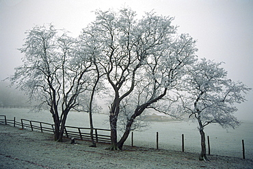 Frost on trees on farmland in winter