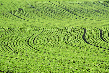 Abstract landscape of a green field