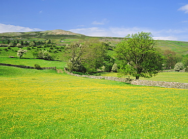 Wild flower meadow, Swaledale, Yorkshire Dales National Park, North Yorkshire, England, UK, Europe