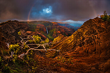 An Acacia Koa tree reaches out over the Waimea Canyon as a faint sunset rainbow stretches over Waipo'o Falls. Kauai, Hawaii