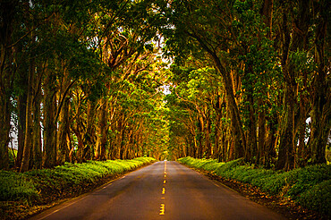 A tunnel of trees stretches out to the horizon as the light trickles down onto the road below.