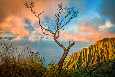 A lone acacia koa tree stretches up to the colorful sunset clouds over the Kalalau Valley.