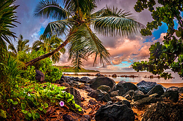 Sunrise under a coconut palm on a calm ocean bay in Hawaii.