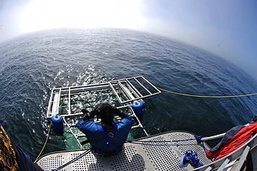 Farallon Islands, Great white shark diving paradise, San Francisco, California, United States of America