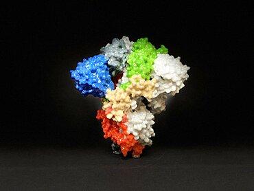 SARS-CoV-2, COVID-19 Virus, Spike Protein