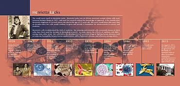 HeLa Timeline, Infographic