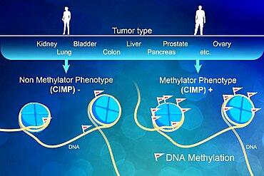 DNA Methylation, Epigenetics