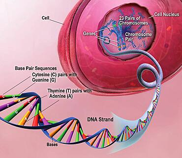 Early Onset AD: DNA, Chromosomes and Genes