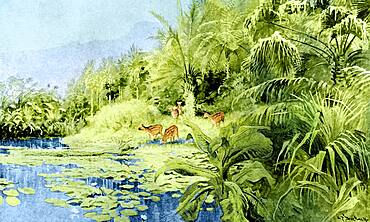 Prehistoric, Oligocene Landscape