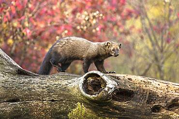 Fisher on a Dead Tree