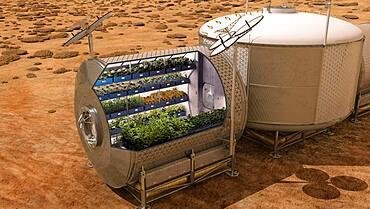 Vegetable Garden on Mars