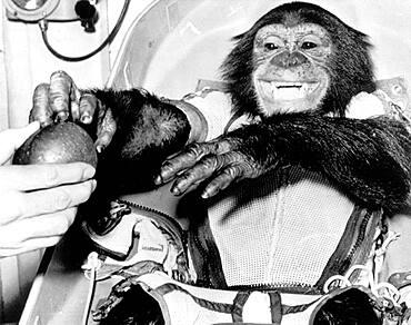 Ham, First Chimpanzee in Space, 1961