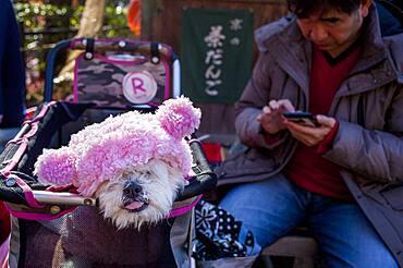 Dog and owner, in Kiyomizu-dera temple, Kyoto. Kansai, Japan.
