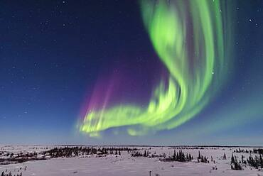 A superb display of aurora borealis seen on March 14, 2016 when it reached Level 5 storm levels. Here it begins in the evening twilight and in the light of the 6-day-old Moon. Jupiter is at right. This view is looking east.