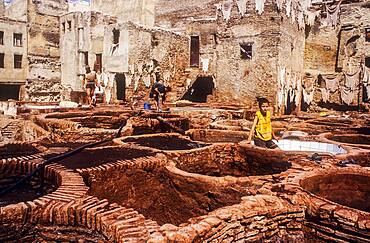 Workers, in Tannery, Medina, UNESCO World Heritage Site, Fez, Morocco, Africa.