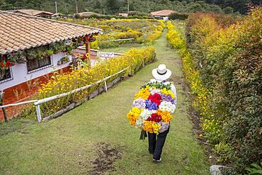 Silletero, flower farmer, Finca, silletera, farm, Vereda Barro Blanco,  Sector El Rosario, Medellín, Colombia