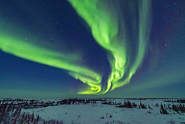 Curtains of aurora during an active storm on February 18, 2018 from the Churchill Northern Studies Centre, in the early evening in the last of the twilight. This night the aurora was brightest early in the evening. The Big Dipper is at left.