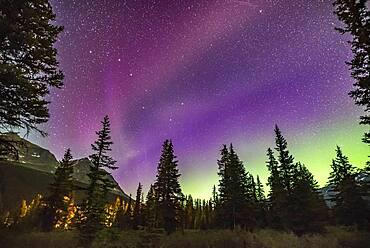 The unusual STEVE auroral arc across the northern sky at Bow Lake, Banff National Park, Alberta on the night of July 16-17, 2018. The more normal green auroral arc is lower across the northern horizon. But STEVE here appears more pink.