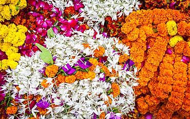 The flower market,Varanasi, Uttar Pradesh, India