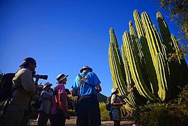 Visitors looking at large Mexican giant cardon cactus (Pachycereus pringlei) on Isla Santa Catalina, Baja California Sur, Mexico.