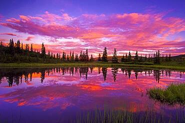 INTENSE Sunset Reflected in Nugget Pond, Denali National Park, Alaska